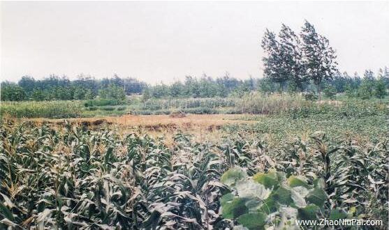 山东省临沂市大城后村齐刀币窖藏地点